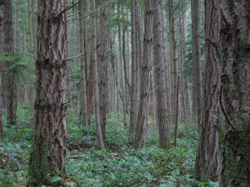forest_on_san_juan_island
