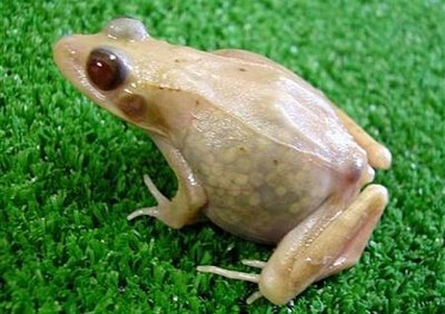 scientistfrog